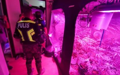 Marijuana greenhouse busted in Taguig condo
